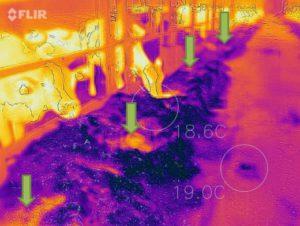 Q-Tipps im August Wärmebild 2